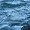Western Waters :