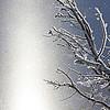 Winter :
